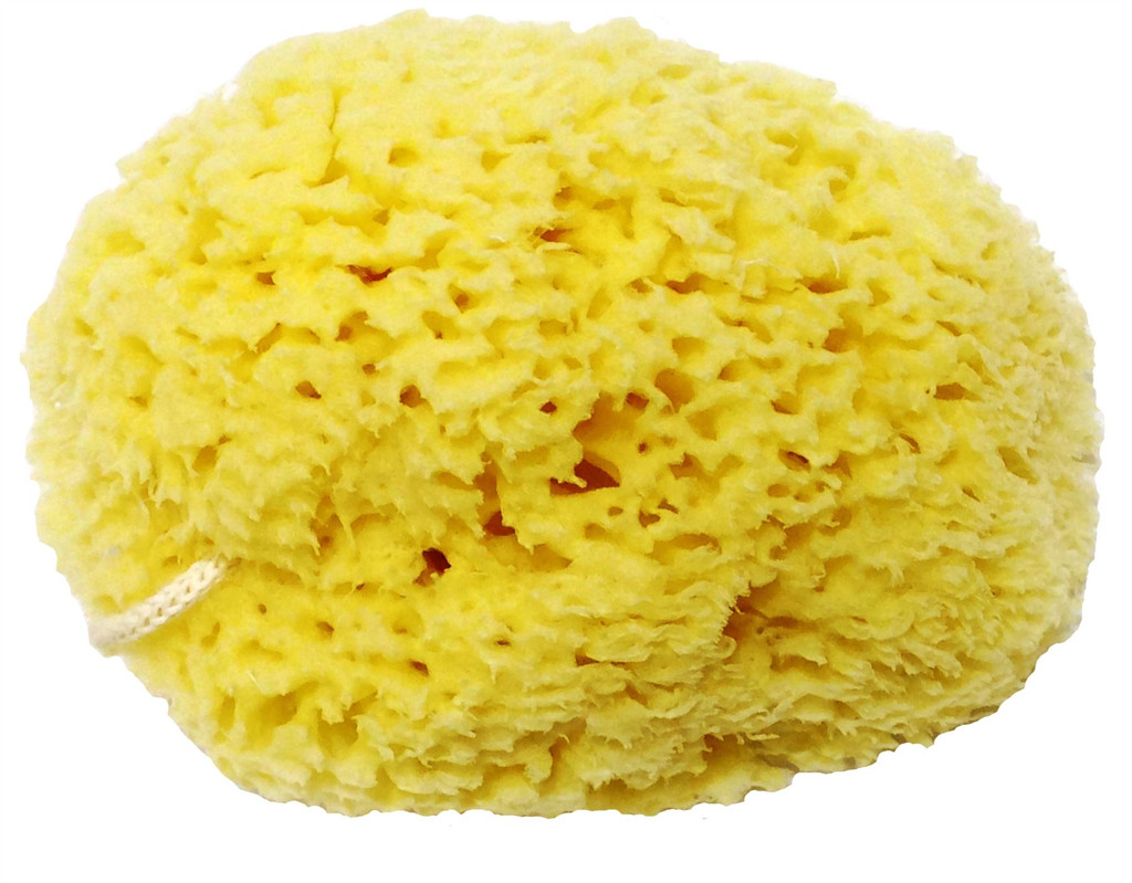 Honeycomb Natural Sea Sponge - Strong and durable - suitable for both children and adults, for use in bathing, cleansing, exfoliating and applying cosmetics