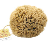 Bahama Natural Sea Sponge - strong, dense and durable - 100% Natural & Organic - Hypoallergenic - for babies, children and adults - used in bathing, cleansing, exfoliating, make-up, pets