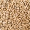 Australian Sunflower Seeds 5KG