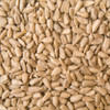 Australian Sunflower Seeds 12.5KG