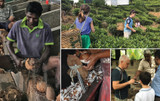 A Visit to Organic Farms in Sri Lanka [Supplier Story]