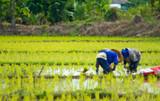 Organics From China - Is It Really Organic?