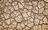 Australian Drought Crisis: What this Means for our Crops