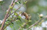 Super Manuka, A Powerful Antibacterial Australian Honey!