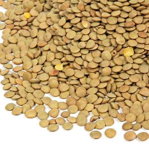 Organic Green Lentils 25KG