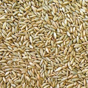 Organic Australian Rye Grain 12.5KG