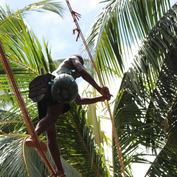 Organic Coconut Aminos 250ml