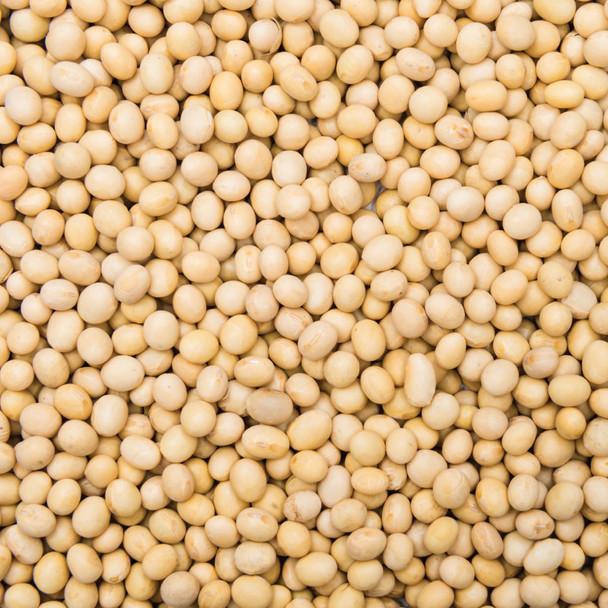 Organic Soya Beans 12.5KG