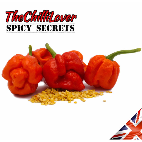 10 Super Hot Trinidad Moruga Scorpion Chilli Pepper Seeds