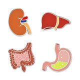Human Internal Organs 4-Pin Set