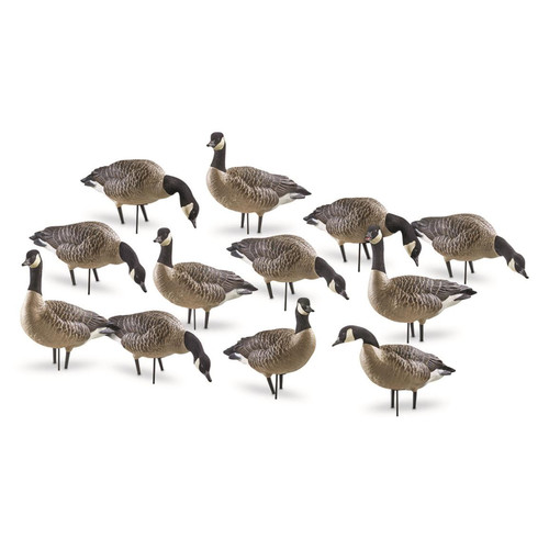 Avian-X Painted Outfitter Canada Goose Decoy with Slot Bag Pack of 12