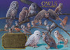 Owls of North America - 1000pc Jigsaw Puzzle by Cobble Hill