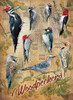 Notable Woodpeckers - 500pc Jigsaw Puzzle By Cobble Hill