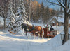Cobble Hill Jigsaw Puzzles - Sugar Shack Horses