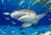 Educa Jigsaw Puzzles - Shark