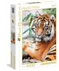 Sumatran Tiger - 1000pc Jigsaw Puzzle by Clementoni