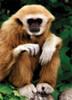 Wildlife: Monkey - 54pc Mini Jigsaw Puzzle by D-Toys (discon-23481)