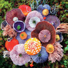 Mushrooms: Agaric - 750pc Jigsaw Puzzle by Ceaco