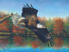 Wetlands Eagle - 1000pc Jigsaw Puzzle By Sunsout