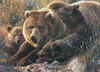 Grizzly Family - 350pc Family Jigsaw Puzzle by Cobble Hill