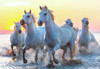 White Horses At Sunset - 1000pc Jigsaw Puzzle by Educa