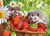Strawberry Dessert - 260pc Jigsaw Puzzle By Castorland