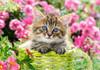 Kitten in Flower Garden - 500pc Jigsaw Puzzle by Castorland