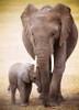 Eurographics Jigsaw Puzzles - Elephant & Baby
