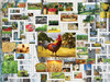 Puzzle Combos: Farm & Country - 1000pc Crossword Jigsaw Puzzle By Sunsout
