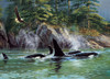 Orcas - 1000pc Jigsaw Puzzle By Cobble Hill