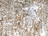 Realtree Snowy Archer - 500pc Jigsaw Puzzle by Lang