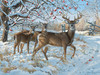 Winter Deer - 500pc Jigsaw Puzzle by Cobble Hill