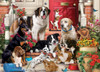 A Dog's Life - 1000pc Jigsaw Puzzle by Vermont Christmas Company