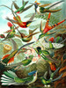 New York Puzzle Company Hummingbirds Jigsaw Puzzle