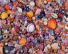 Hard Jigsaw Puzzles - Sea Shells