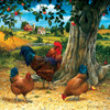 Rooster and Hens - 500pc Jigsaw Puzzle by Sunsout