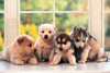 Tomax Jigsaw Puzzles - Little Doggies
