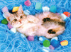 Tomax Jigsaw Puzzles - Lovely Kitten