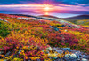 Northern Palette - 1000pc Jigsaw Puzzle By Castorland
