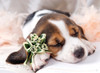 Tomax Jigsaw Puzzles - Basset Hound