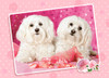 Two Doggies in Pink - 120pc Jigsaw Puzzle By Castorland (discon-24180)