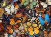 Flying Colors - 500pc Jigsaw Puzzle By Tomax