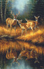Whitetail Reflections - 550pc Jigsaw Puzzle By Sunsout