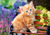 Ginger Kitten - 500pc Jigsaw Puzzle By Castorland