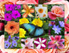 In Bloom - 500pc Jigsaw Puzzle By Springbok
