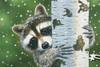 Jigsaw Puzzles - Peekaboo Raccoon
