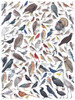 Birds of Eastern/Central North American Birds - 1000pc Jigsaw Puzzle by New York Puzzle Company