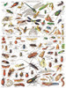 Insects ~ Insectes - 1000pc Jigsaw Puzzle by New York Puzzle Company