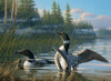 Common Loons - 1000pc Jigsaw Puzzle by Cobble Hill