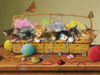 Basket Case - 350pc Family Jigsaw Puzzle by Cobble Hill